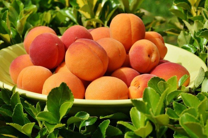 The Forgotten Apricot